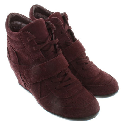Ash Sneakers in Bordeaux
