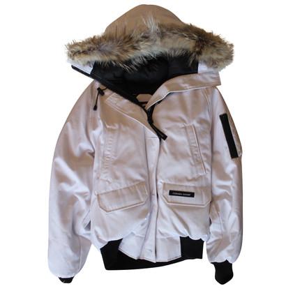 Canada Goose Canada goose arctic program white