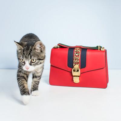 fdce258c4d382 Gucci Taschen Second Hand  Gucci Taschen Online Shop
